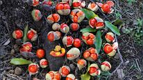 bush-tomatoes.jpg
