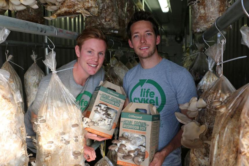 gourmet-oyster-mushrooms