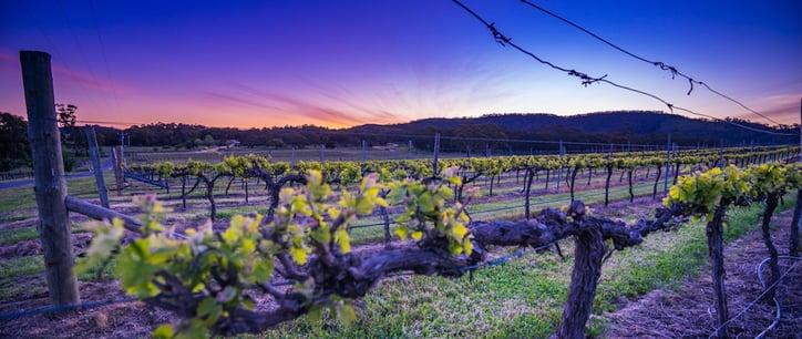 taltarni-vineyards